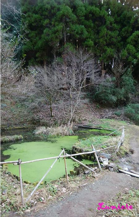 幣立神宮 池