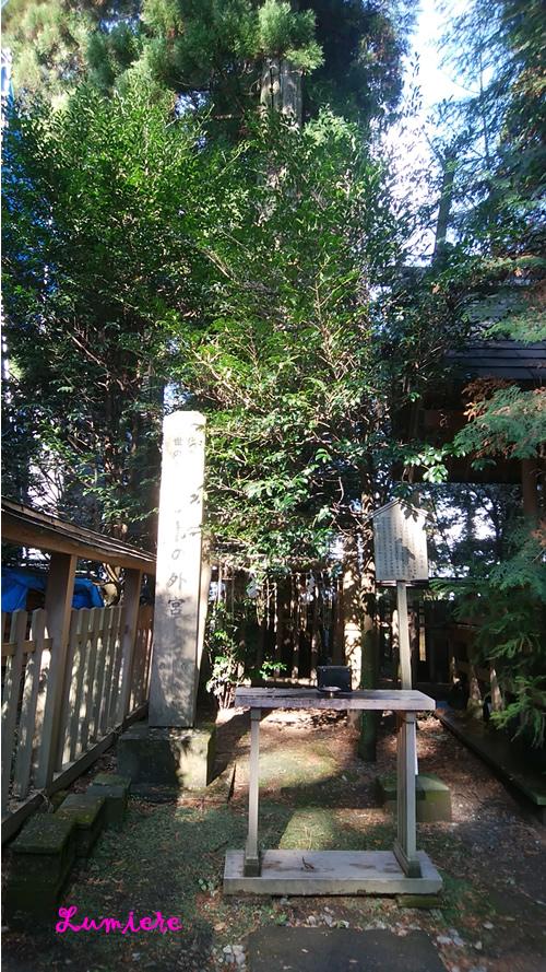 幣立神宮 神木